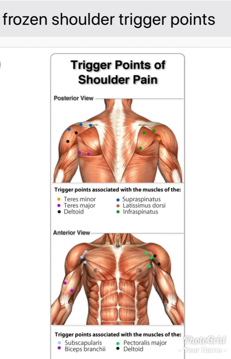 Tha Muscle Whisperer On Twitter If You Have Shoulder Pain