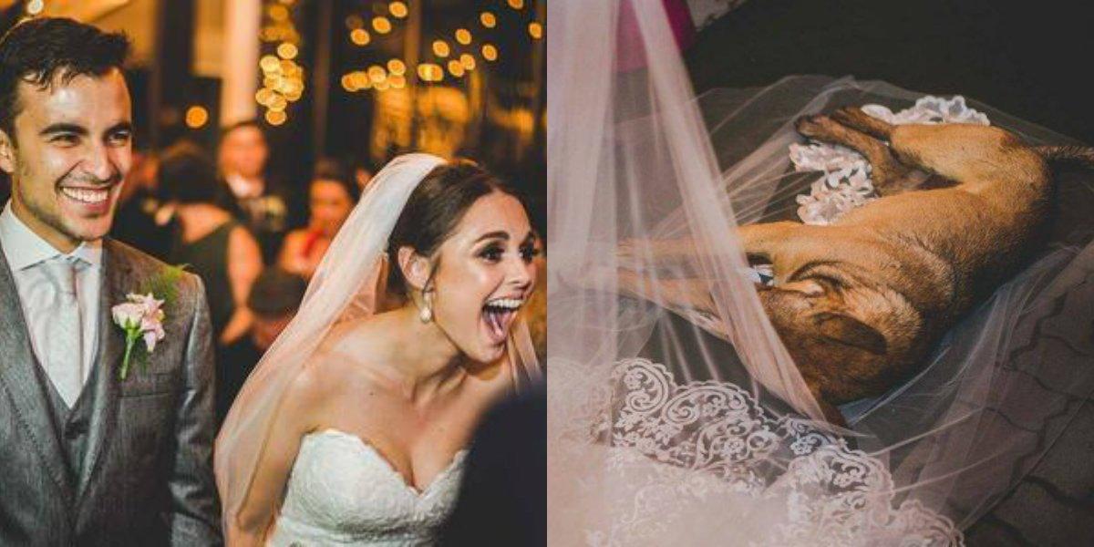 Vira-lata invade cerimônia de casamento, deita no véu da noiva e será adotado por ela https://t.co/exGPklSQjs