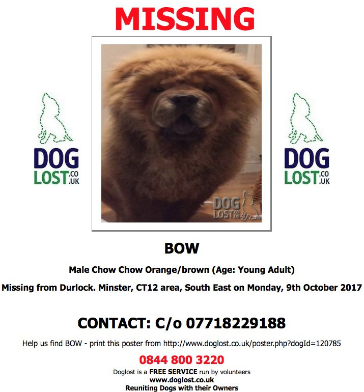 #LOST BOW Male #ChowChow #Durlock #Minster #CT12 #Lostdog #ScanMe   http://www.doglost.co.uk/dog-blog.php?dogId=120785#.Wd06IBOPJYc…pic.twitter.com/d15IebLyE7