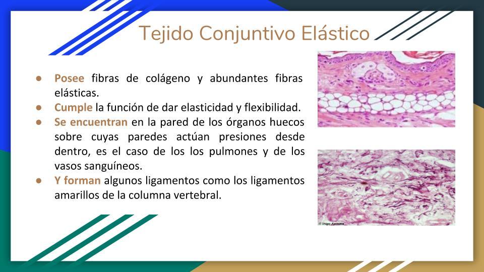 Funcion tejido cartilaginoso hialino