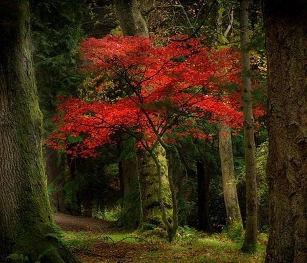 Rubired #Forests and #Trees of our #Earth <br>http://pic.twitter.com/YS11ieD4dG