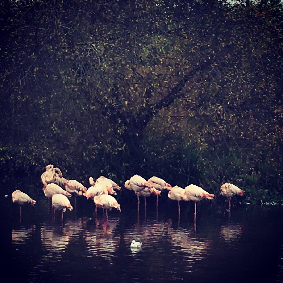 Flamingomkt photo