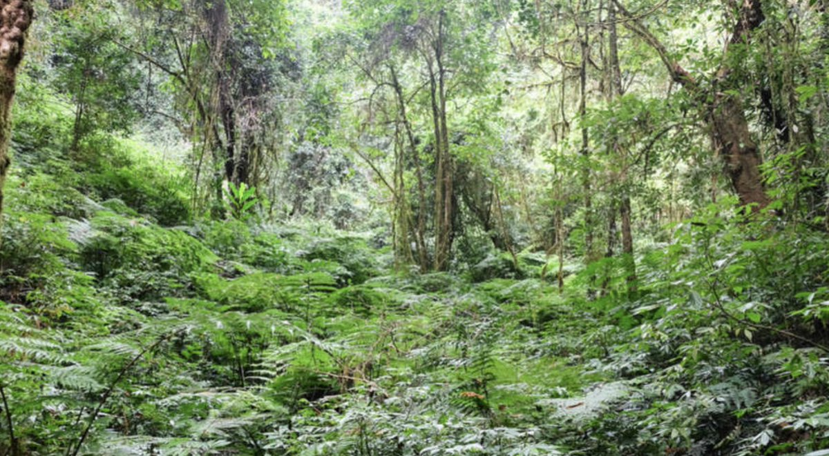 &quot;We need to drastically reduce our #emissions and increase our #forests&quot; via @iflsciencen  http:// ow.ly/H5jW30g3HkO  &nbsp;   #earth #ethereum #bitcoin<br>http://pic.twitter.com/VZHP8K82oe