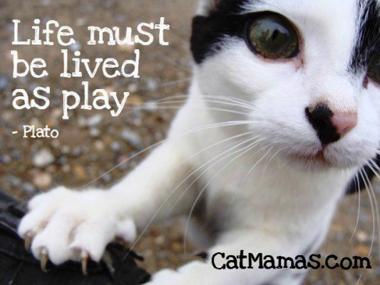 A little life #philosophy for you ... #cat style! #pets <br>http://pic.twitter.com/uRV3nbPFAw