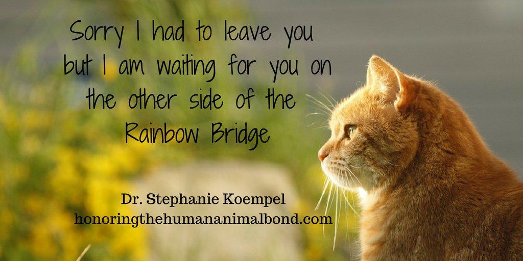 I miss you everyday. #petloss #rainbowbridge #rip #OTRB #catoftheday #ilovemycat #CatsOfTwitter #catlovers #kitty #purr #meow #catlife #pets <br>http://pic.twitter.com/ZP5LL35PGv