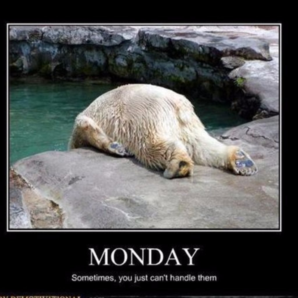 ...But not today! #MondayMotivation #monday #polarbear #JustDoIt<br>http://pic.twitter.com/MsC9qon2bF