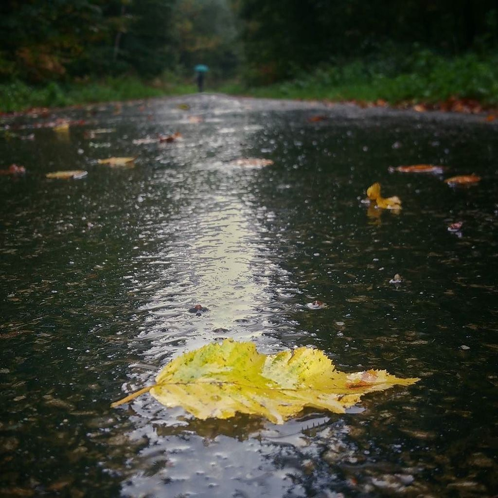 Autumn in ROUEN  #igersrouen #rouen #foret #igersfrance #jp_gallery_member #insta_normandy #ig_europe #gf_france #…  http:// ift.tt/2yIY33K  &nbsp;  <br>http://pic.twitter.com/ostAiZoxZe