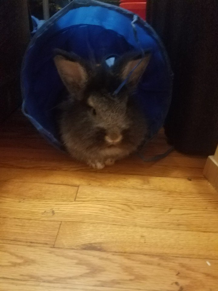 Chillin&#39; in my tunnel  #bunnies #rabbits #pets #cuteanimals #awww<br>http://pic.twitter.com/melX0f1yPd