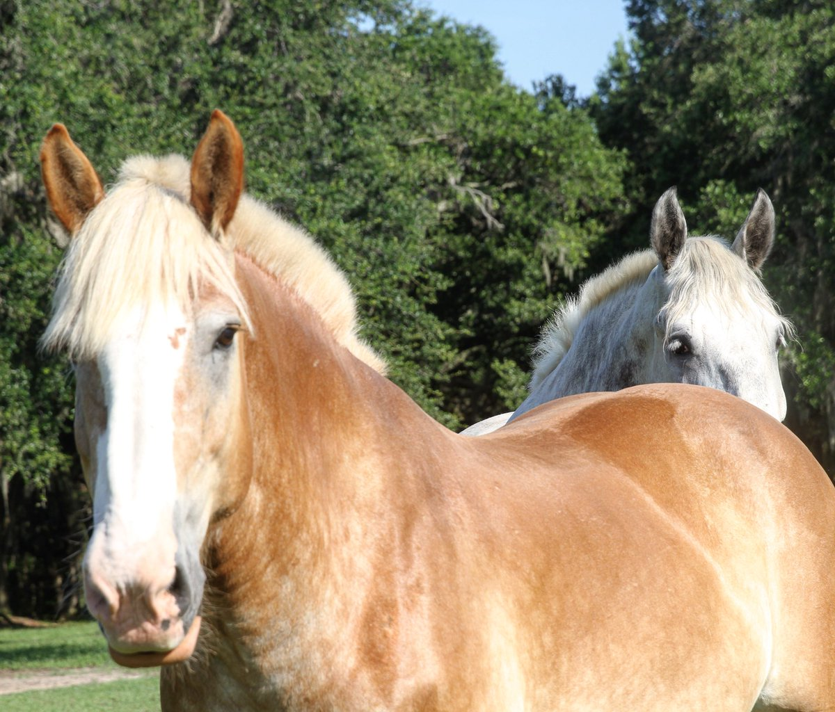 Seeing these beautiful faces keeps us going on a Monday... #MondayMotivation #Horses #Charleston <br>http://pic.twitter.com/rTCk4TniMg