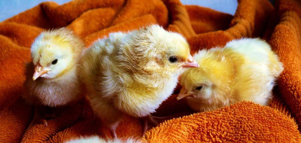 Retweet if you agree that all #animals deserve our love and compassion, not just the ones we call #pets. <br>http://pic.twitter.com/0j42x8wDSg