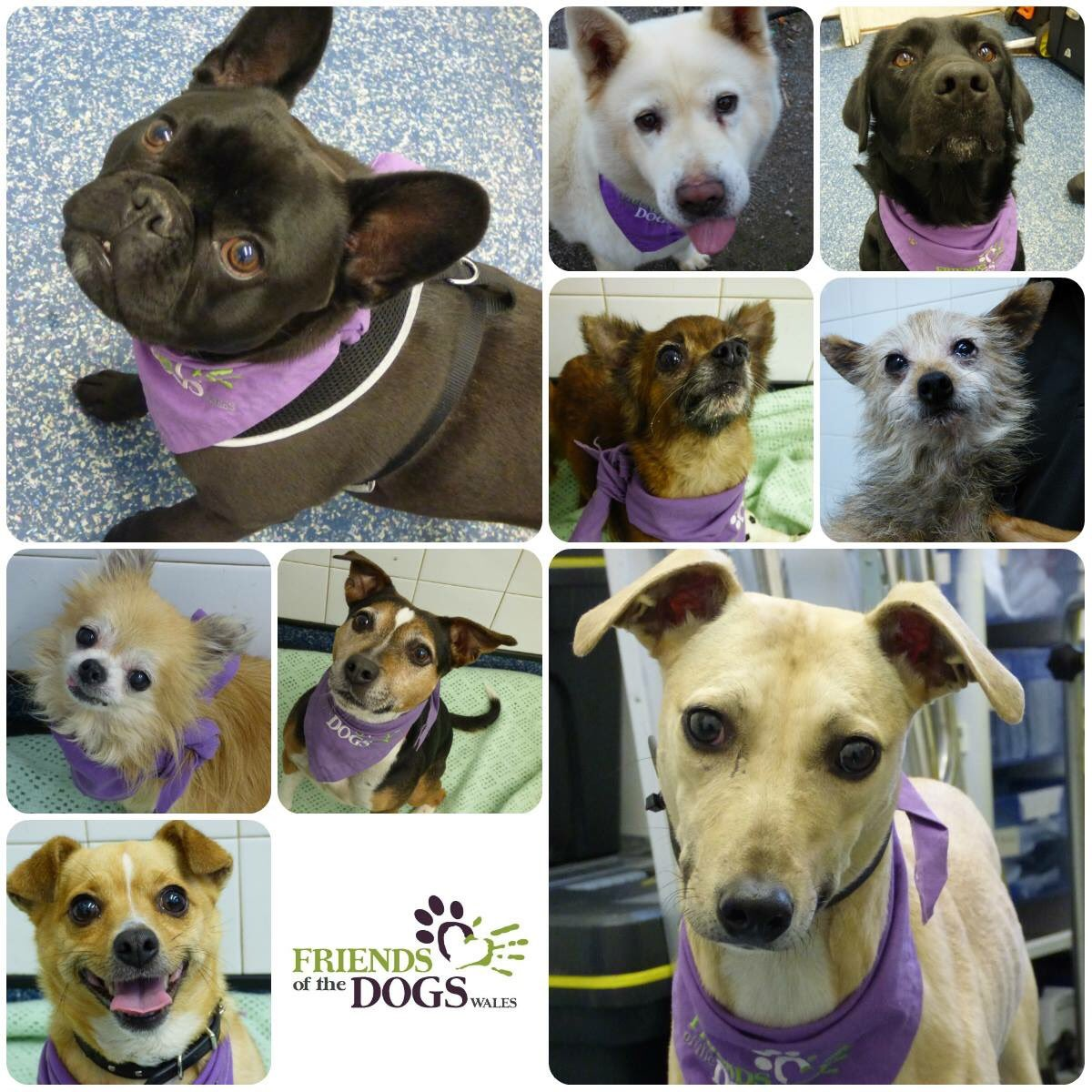 #Cardiff dogs home #K9hour all available for adoption<br>http://pic.twitter.com/5dfyJ0b0fO