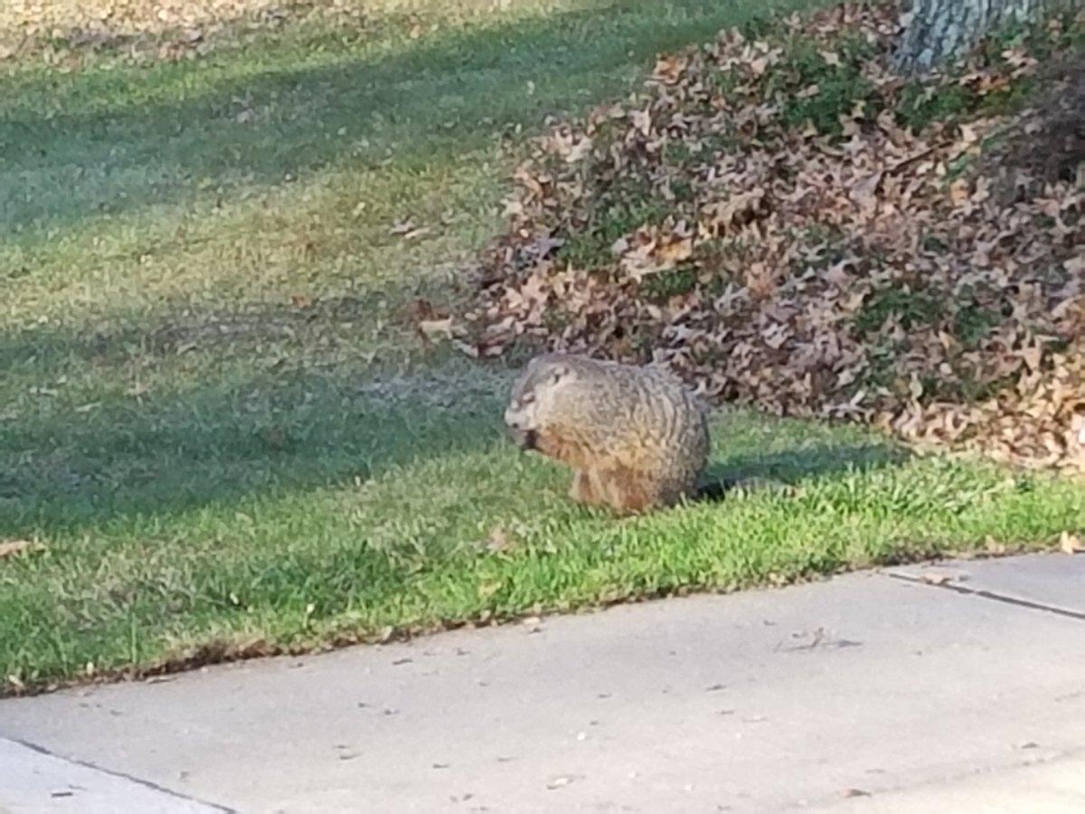 groundhog hashtag on twitter
