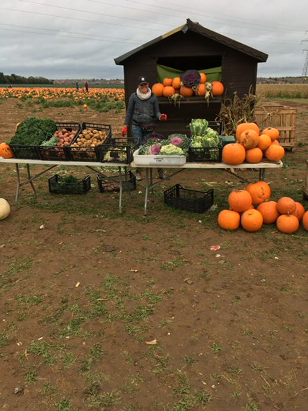 #halloween #pyo #pumpkins happy kids happy customers #veg #agronomy <br>http://pic.twitter.com/eUX48ChY4L