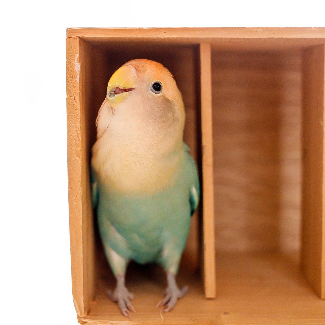 お気に入りの木箱。この箱に入ると、わかりやすく幸せそうなお顔になる。入ると背伸びして天井に頭をつけてみたくなるらしい。 そして、内股なのがまたかわいいのだ(^^)