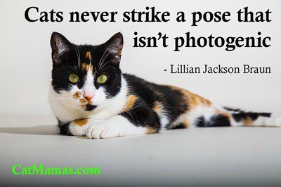 An unflattering #cat photo turns out funny - never ugly! Why can&#39;t we humans have the same skill? #kitty #pets <br>http://pic.twitter.com/yNUVDlj9k7