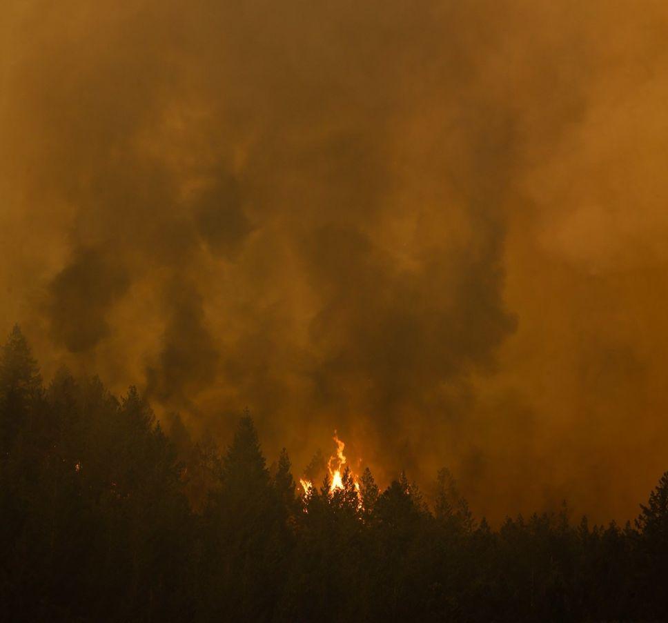 La perte des surfaces boisées mondiales a bondi de 51% en 2016.  https://t.co/xgi5AHbO2U