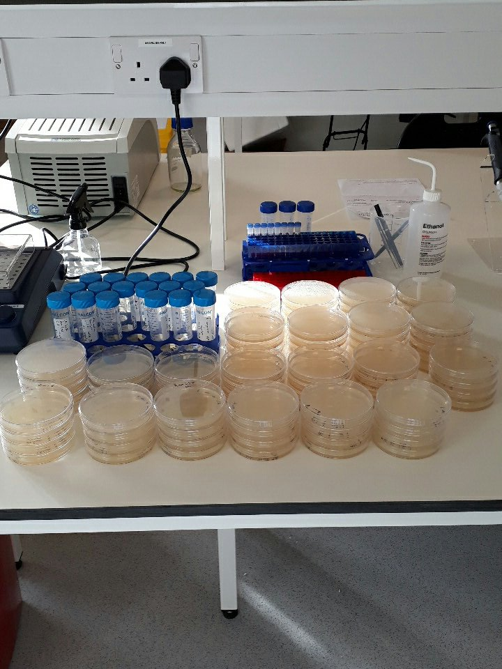 Bacterial mutation/evolutionary experiments have begun at the @LSTMnews #Accelerator building! #BusyMorning #Science @GCAGATGCAATG<br>http://pic.twitter.com/LlbufbJIqk