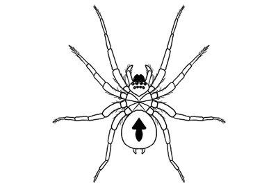 How to Draw a Spider, Step by Step  http:// festyy.com/wq470v  &nbsp;    #Website #WebDesign #WebDevelopment #HTML #PHP<br>http://pic.twitter.com/mNKdemd3Ye