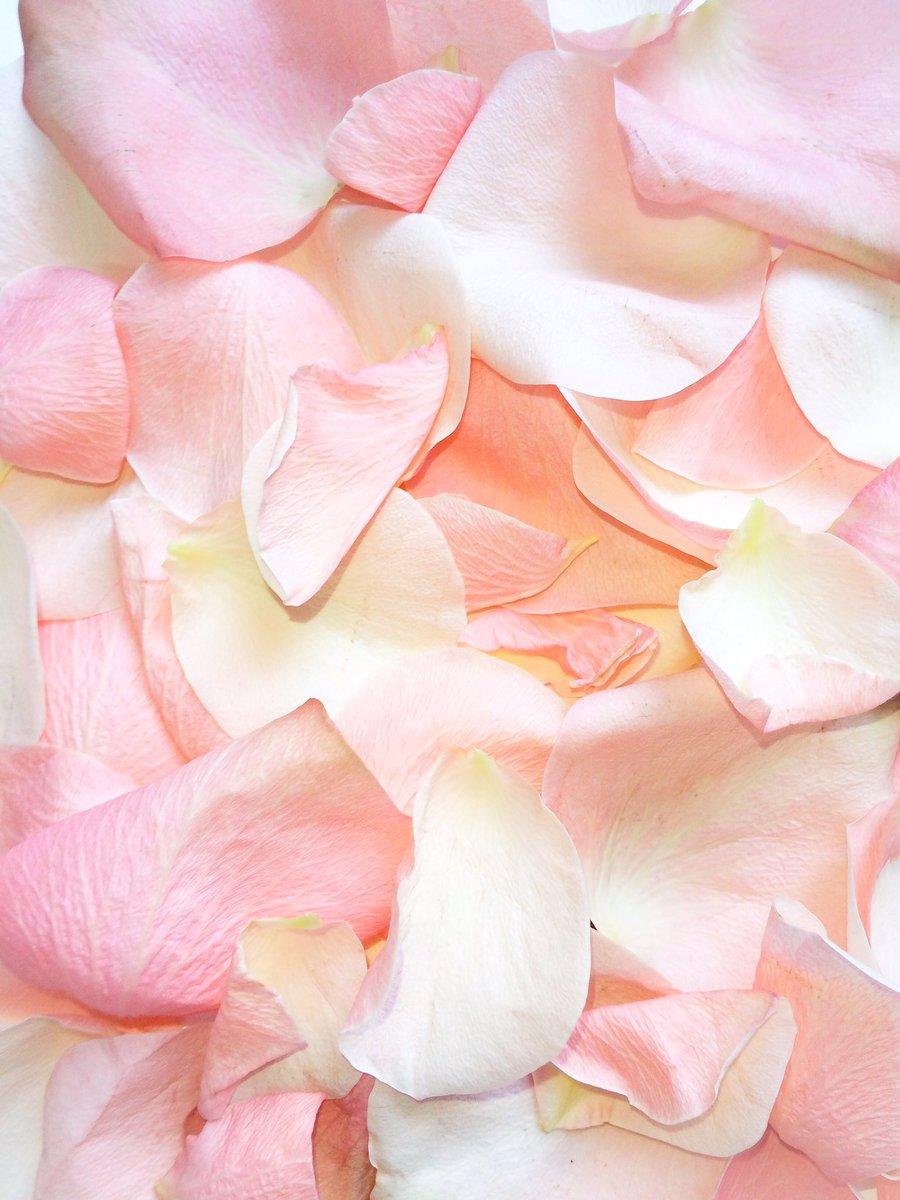 はな言葉 ウェディングドレス Twitterissa バラの花びら壁紙 3色の