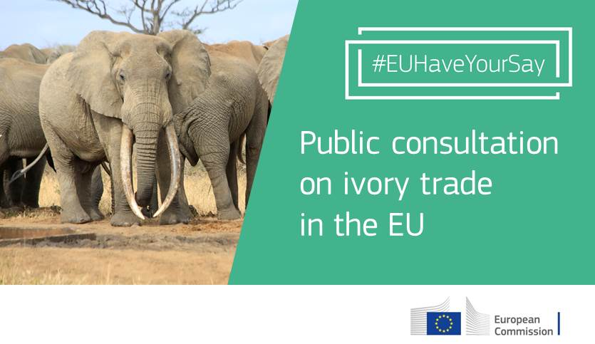 ivory trade research paper Tell your politicians to tell your governments to reject the legal ivory trade and commit to significant funding of the african elephant action plan share.