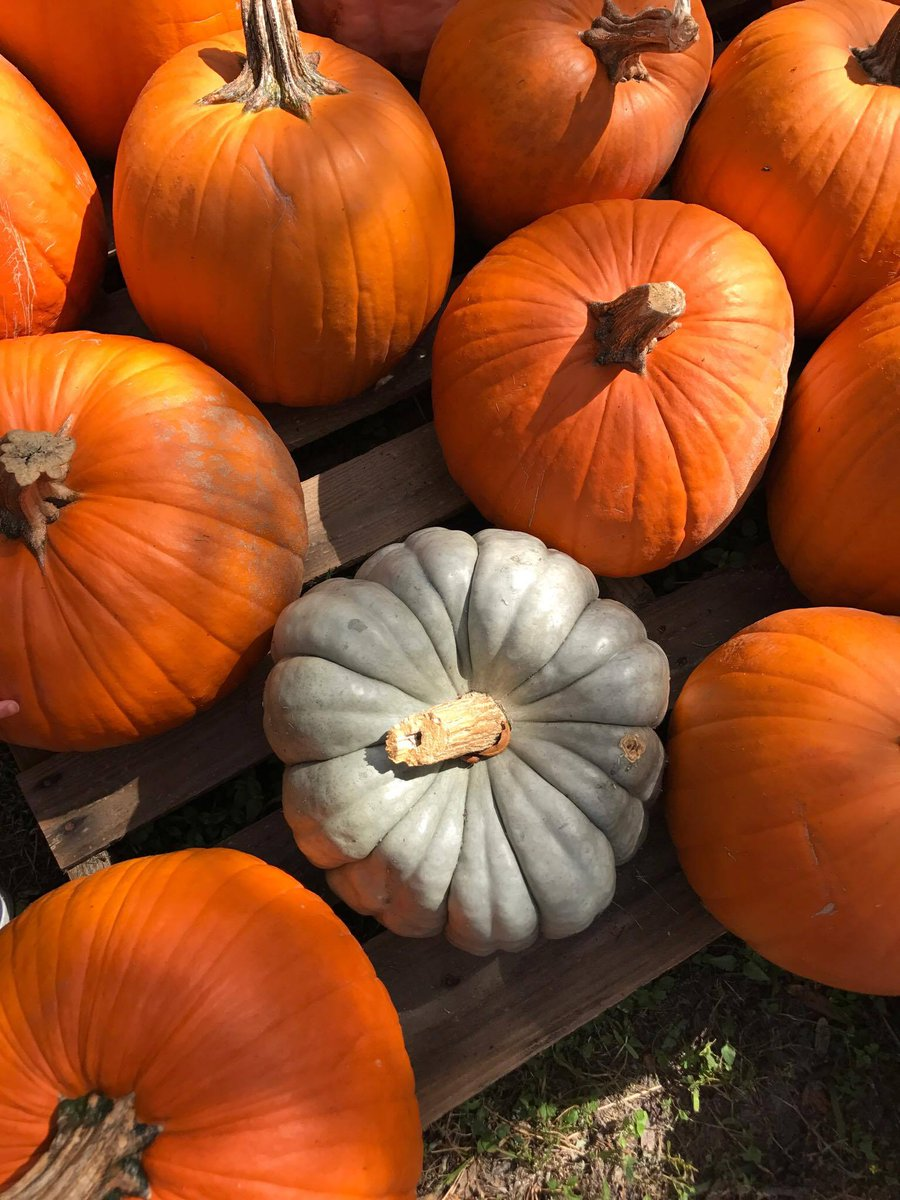 Pics from the Pumpkin Patch! https://t.co/Hj0uGmKmN2 #Fall #PumpkinPatch #Halloween