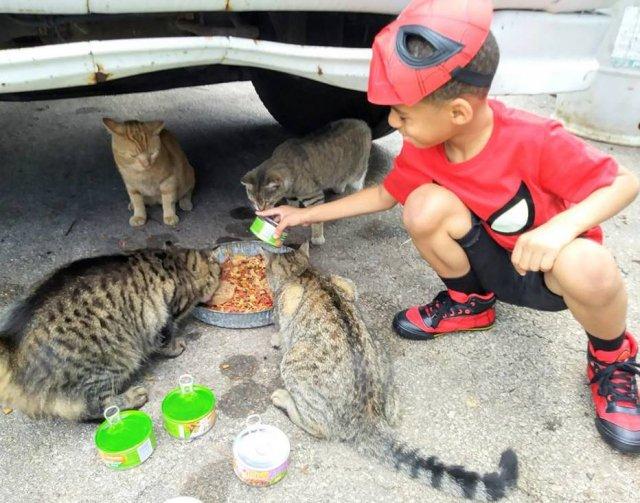 Menino de 5 anos se fantasia de super-herói para 'salvar' gatos de rua https://t.co/eufPQTD8au