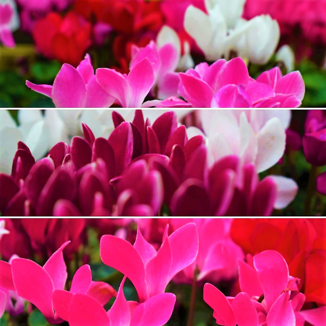 Add #beautiful #colours to your #garden this month #gardening #loveyourgarden <br>http://pic.twitter.com/6vFZhjujaw