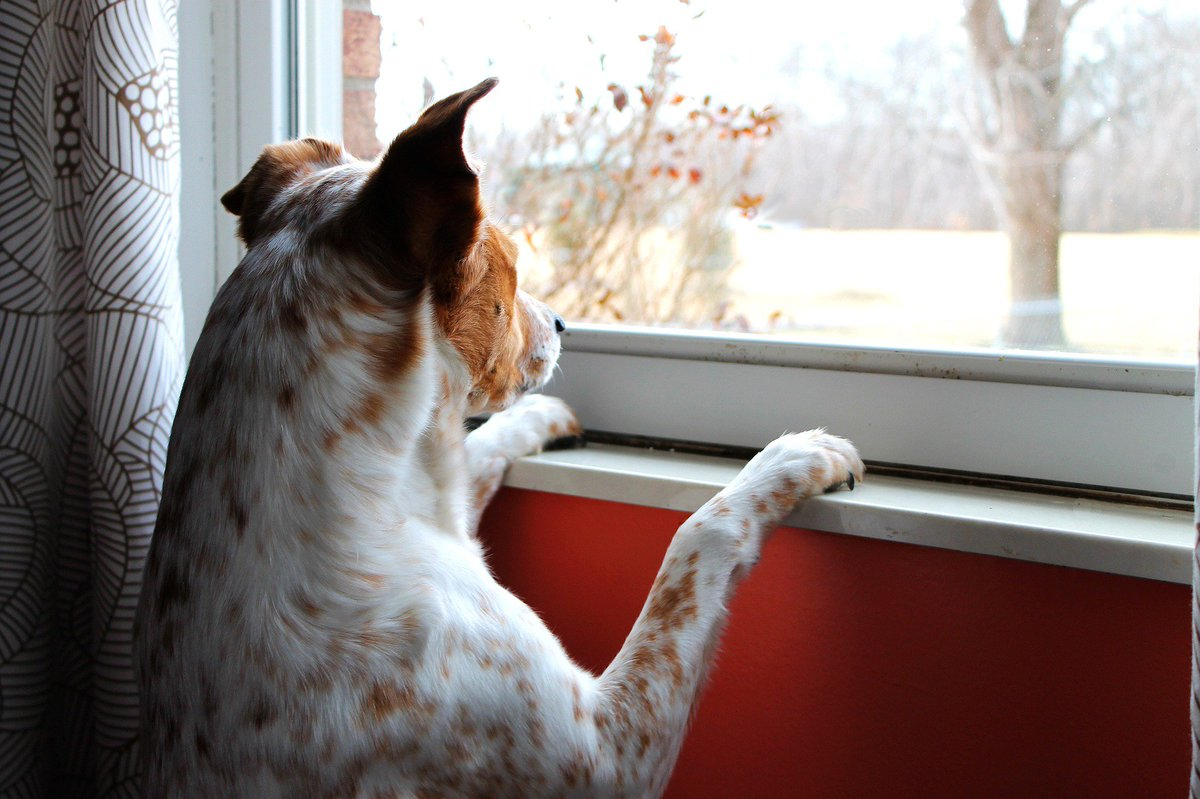 Waiting for #Mommy to come back! #dogfriends<br>http://pic.twitter.com/JPR71Epmay