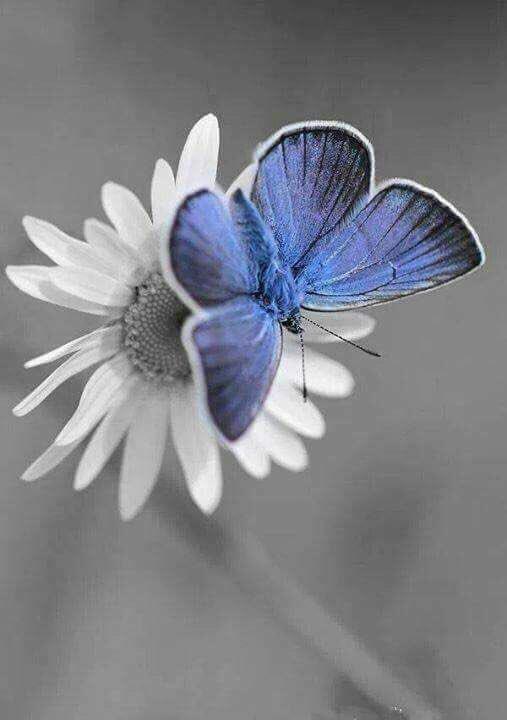 """"""".. اللھم اخرج #حب الدنيا من قلوبنا وابدلنا حُباً لجنتك و شوقاً لرؤيتك"""" .."""