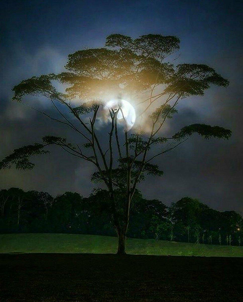 Tora on twitter good night beautiful night i will - Good night nature pic ...