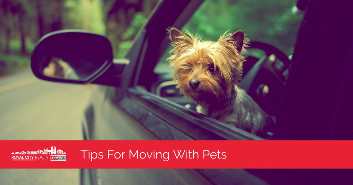 As an important part of your family, your pet deserves to have a stress-free move as well.  https:// royalcity.com/moving-with-pe ts/ &nbsp; …  #Moving #Pets<br>http://pic.twitter.com/BkQWf5ln3J