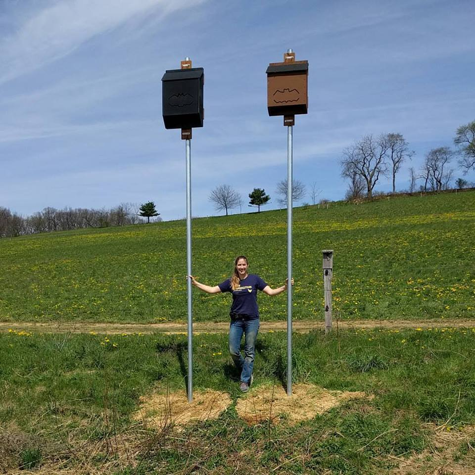 Bats and farmers: Allies in the fight ag...