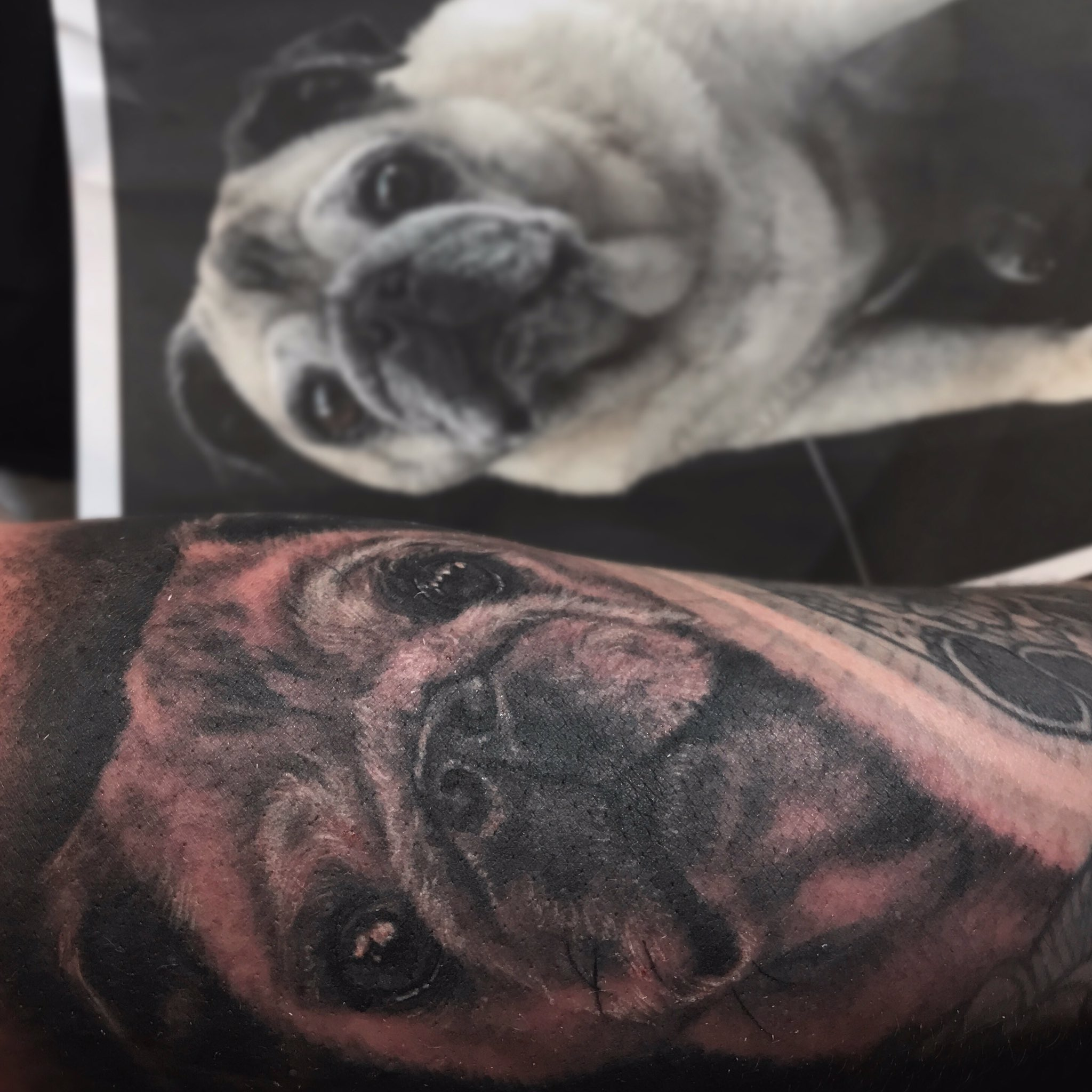 Thank you to @ValleyEyewear for letting me tattoo this portrait of your beloved pug-baby on you. 🖤 https://t.co/r2cO8A1Hf9