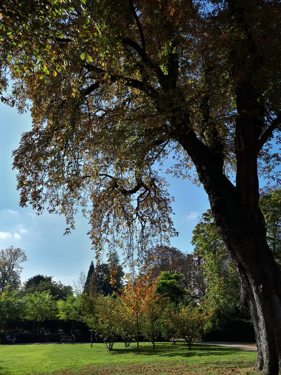 Jardin du luxembourg jardinluco twitter for Chaise jardin du luxembourg