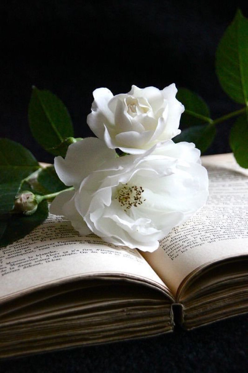 When I've had too much reality, I open a book...  #reading #bookslover<br>http://pic.twitter.com/WGxGMOG3qN