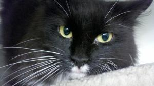 Come rescue #PELUSA before time runs out! #urgent She needs some RTs! #Foster   https://www. petfinder.com/petdetail/3194 5576 &nbsp; … <br>http://pic.twitter.com/LpHBz30SId