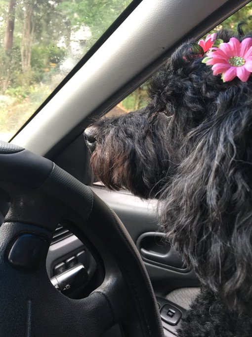 No rest for Roxby, road trip! Happy Birthday from us x