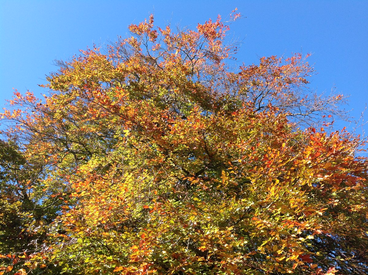 Love the changing seasons in rural #Swaledale. Copper Beach Tree with a great view from the window seat in Bedroom 8. Stunning!!!! <br>http://pic.twitter.com/d4hflBchBA