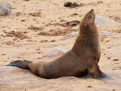 Happy #SaturdayMorning! Do 1 thing for animals today...message @hagegeingob to #end the brutal slaughter of #defenseless #Capefurseals.<br>http://pic.twitter.com/VUG5kHn0yy