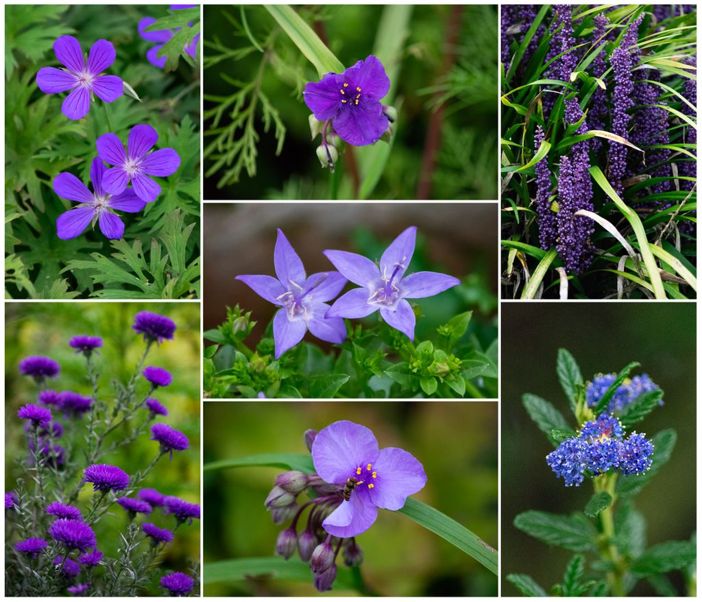 Blue and purple flowers from the garden this morning. Some of the spring and summer flowers are blooming their encore. #October #flowers<br>http://pic.twitter.com/2DRJQNGDXU