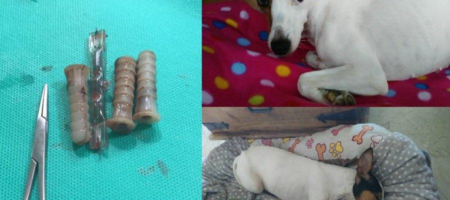 Logran salvar a una perra a la que le ha...