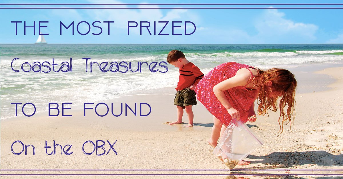 Here are three of the most prized natural #treasures you can find on the #OBX. http:// bit.ly/2pOmRQP  &nbsp;  <br>http://pic.twitter.com/KviSlewRyK
