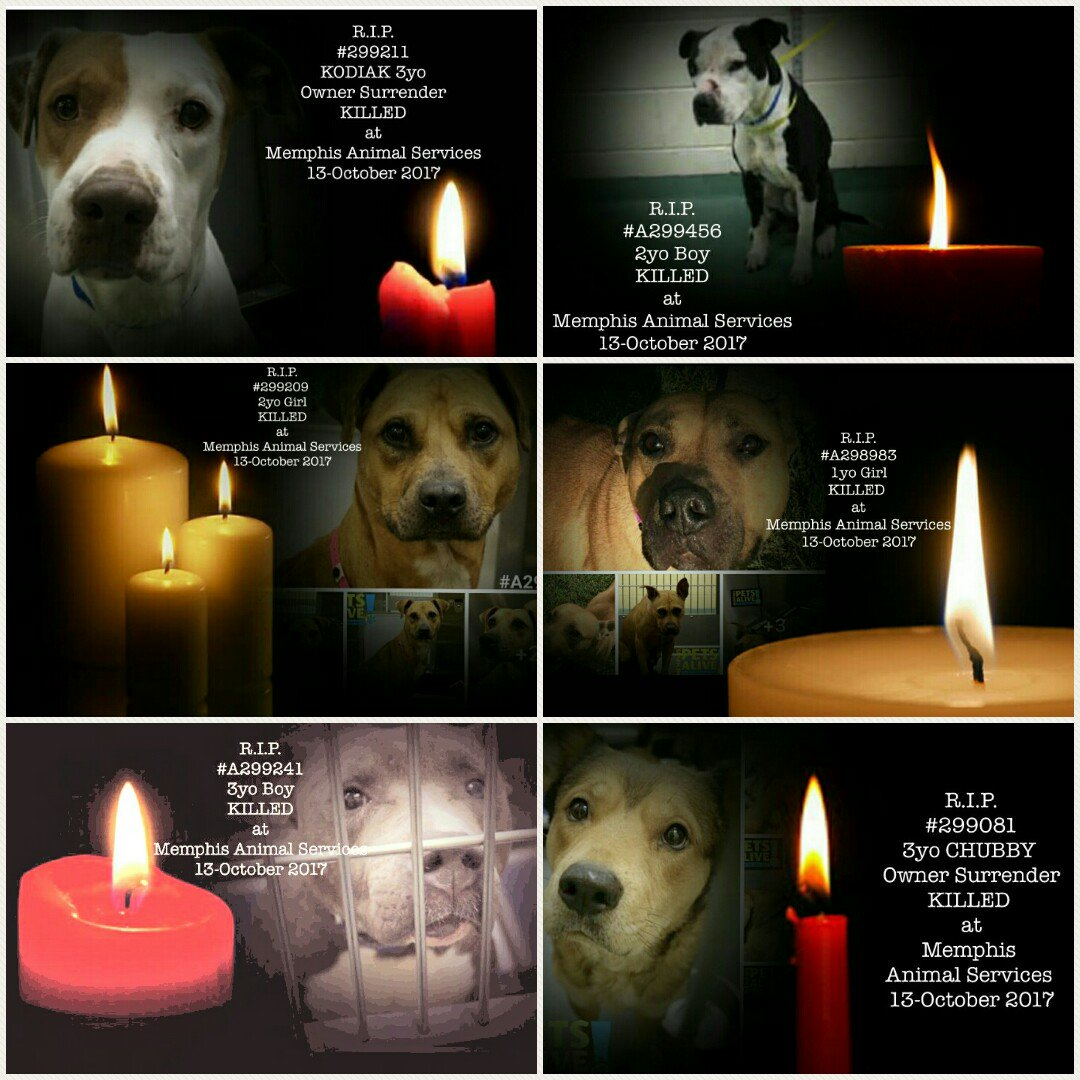 Sadly, like many before us, our cries went unheard.  On Friday 13th October 2017 we paid the ultimate price~we were KILLED at  #TN #Memphis<br>http://pic.twitter.com/6v953ogMwt
