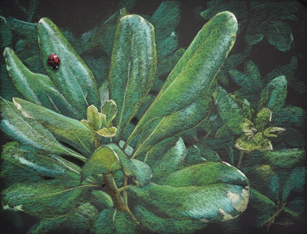 &quot;Dispensing With Camouflage&quot; pastel painting by  http:// reidsart.com  &nbsp;   #ladybug <br>http://pic.twitter.com/9qQFpMcnSR