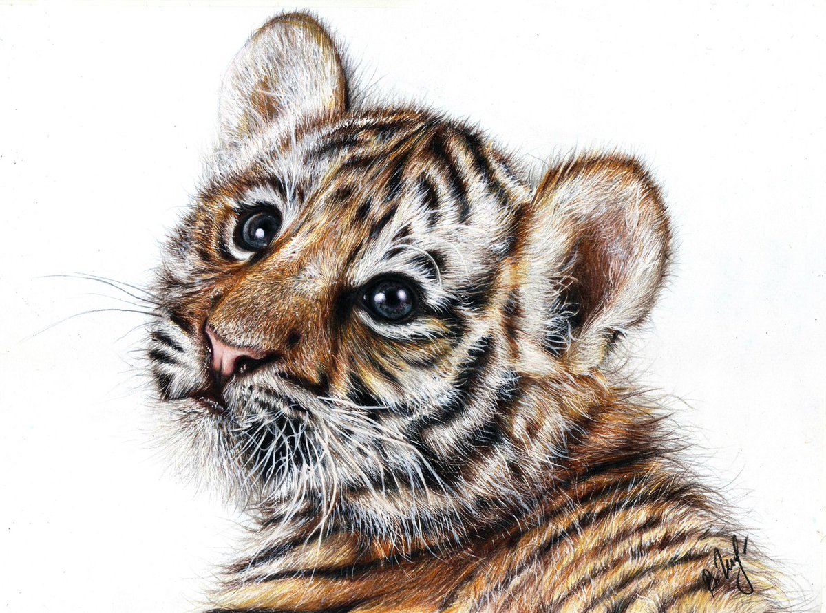 #Tiger. Painting, A4, colored pencils, white gouache.  #art #painting #Pencildrawing <br>http://pic.twitter.com/S9E1EF3tGs