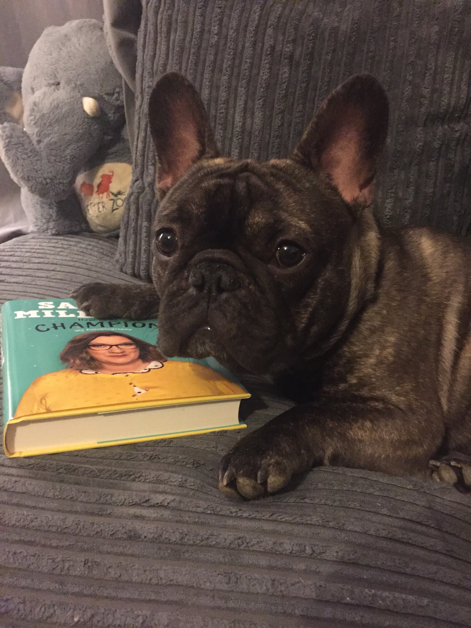RT @KerrynBrannigan: @SarahMillican75 Archie seems like he wants the book to himself! https://t.co/mfRFKlLCyf