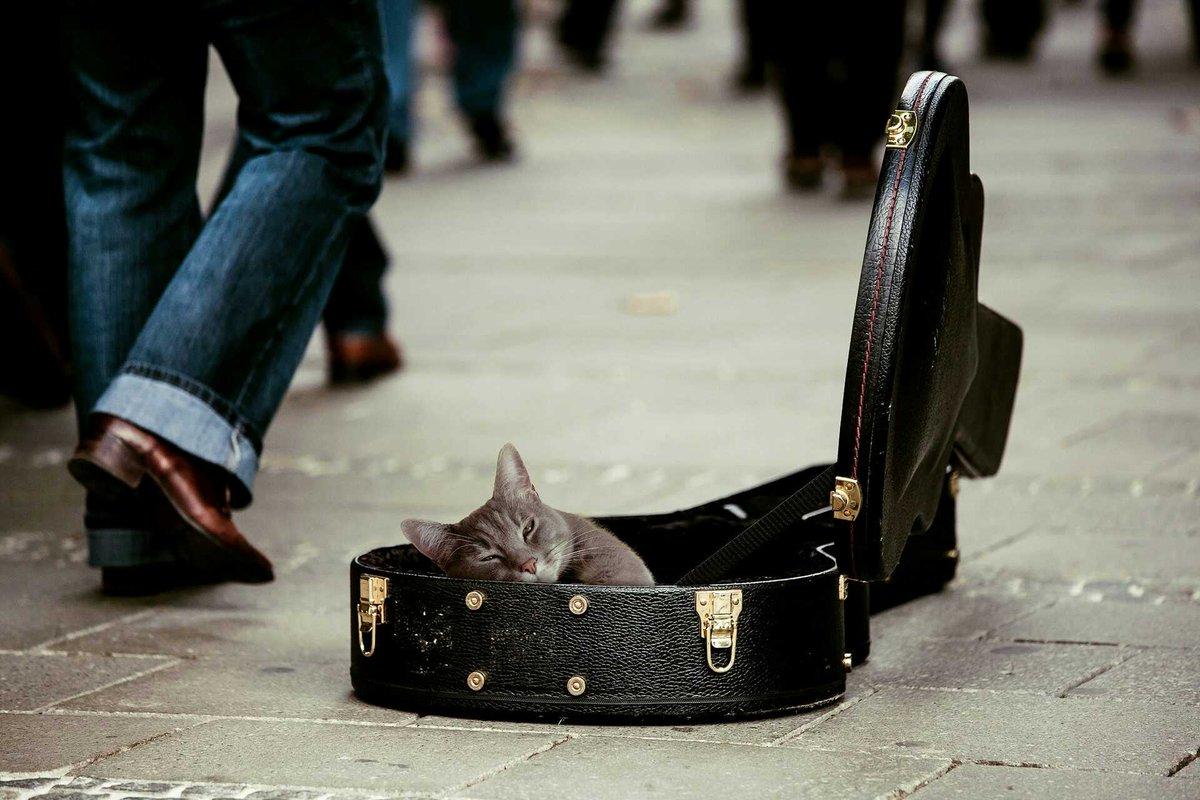 Positive music &#39;Happy Ukulele&#39;  https:// audiojungle.net/item/happy-uku lele/19115122?ref=Baszz &nbsp; …  @BaszMM #commerce #Goodmusic #guitar #joy #gamedev #indiegame<br>http://pic.twitter.com/XdRspFjX1l