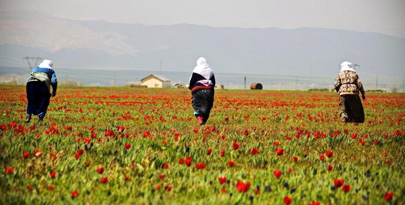 Tüm çiftçi kadınlarımızın 'Dünya Çiftçi Kadınlar Günü' 'nü kutluyoruz....
