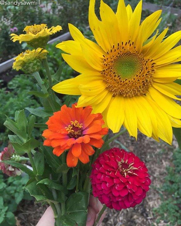 Still looks like summer!  #summerflowers : @sandysawmill  Join UOG&#39;S MONTHLY SEED and GARDEN CLUB at  http:// ift.tt/2uo89Fu  &nbsp;  <br>http://pic.twitter.com/eoSSs0YdMz