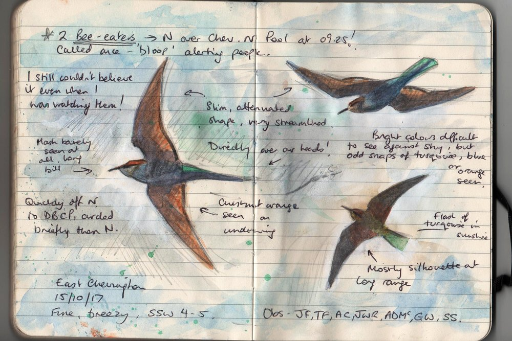 A rainbow in the dark...  https:// boulmerbirder.blogspot.co.uk/2017/10/rainbo w-rising.html &nbsp; …   @NTBirdClub #notes #birdart #sketching #migration #birding #blogging<br>http://pic.twitter.com/E1QOQ4cGmn